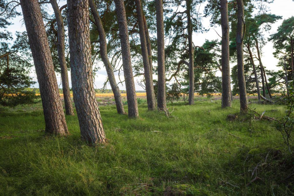 De natuur op de Veluwe